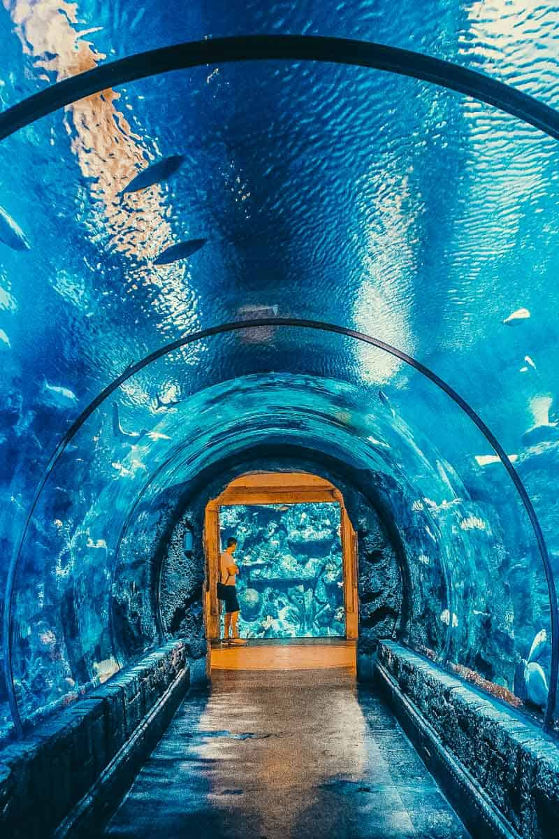 The Shark Reef at Mandalay Bay Hotel on the Las Vegas Strip. See 14 Unique things to do in Las Vegas! There are so many incredible places to see in Las Vegas, here are some of the top places you will not want to miss on your vacation! avenlylane.com | #vegas #lasvegas #nevada #travel #vegas #vacation #travel #avenlylanetravel