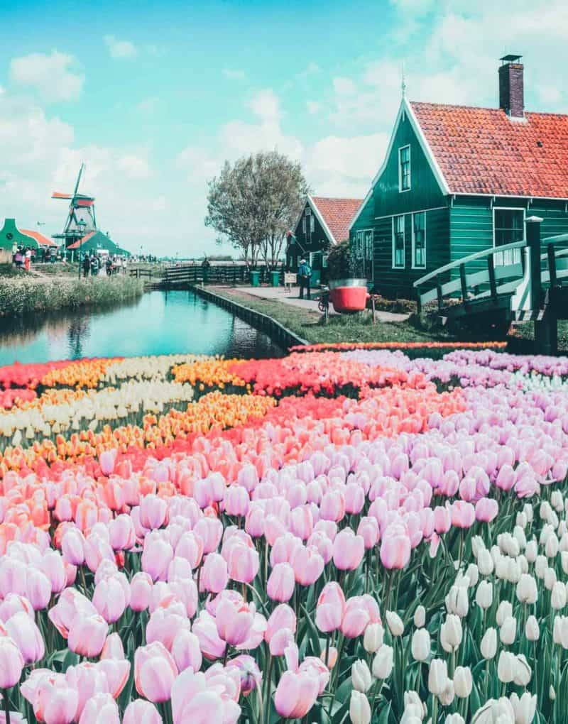 Top things to do in the Netherlands!